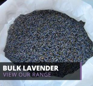 bulk lavender