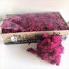 Erica Pink Icelandic Reindeer Moss Preserved Dried Craft Flower Decoration